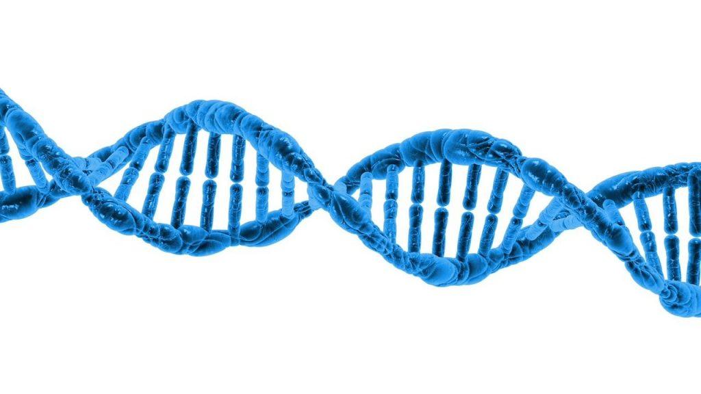 cuanta proteina podemos asimilar